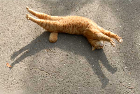 猫好き必見!男性が猫に好かれる3つのポイント。
