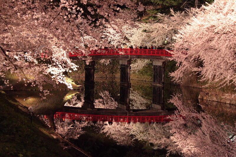カップルや夫婦でしっぽりと、国内の三大夜桜のご紹介。東京にも!