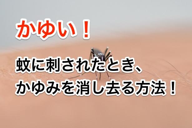 かゆい!蚊に刺されたとき かゆみを消し去る方法!