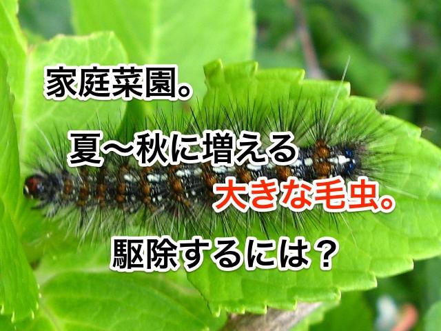 家庭菜園。夏〜秋に増える大きな毛虫。駆除するには?