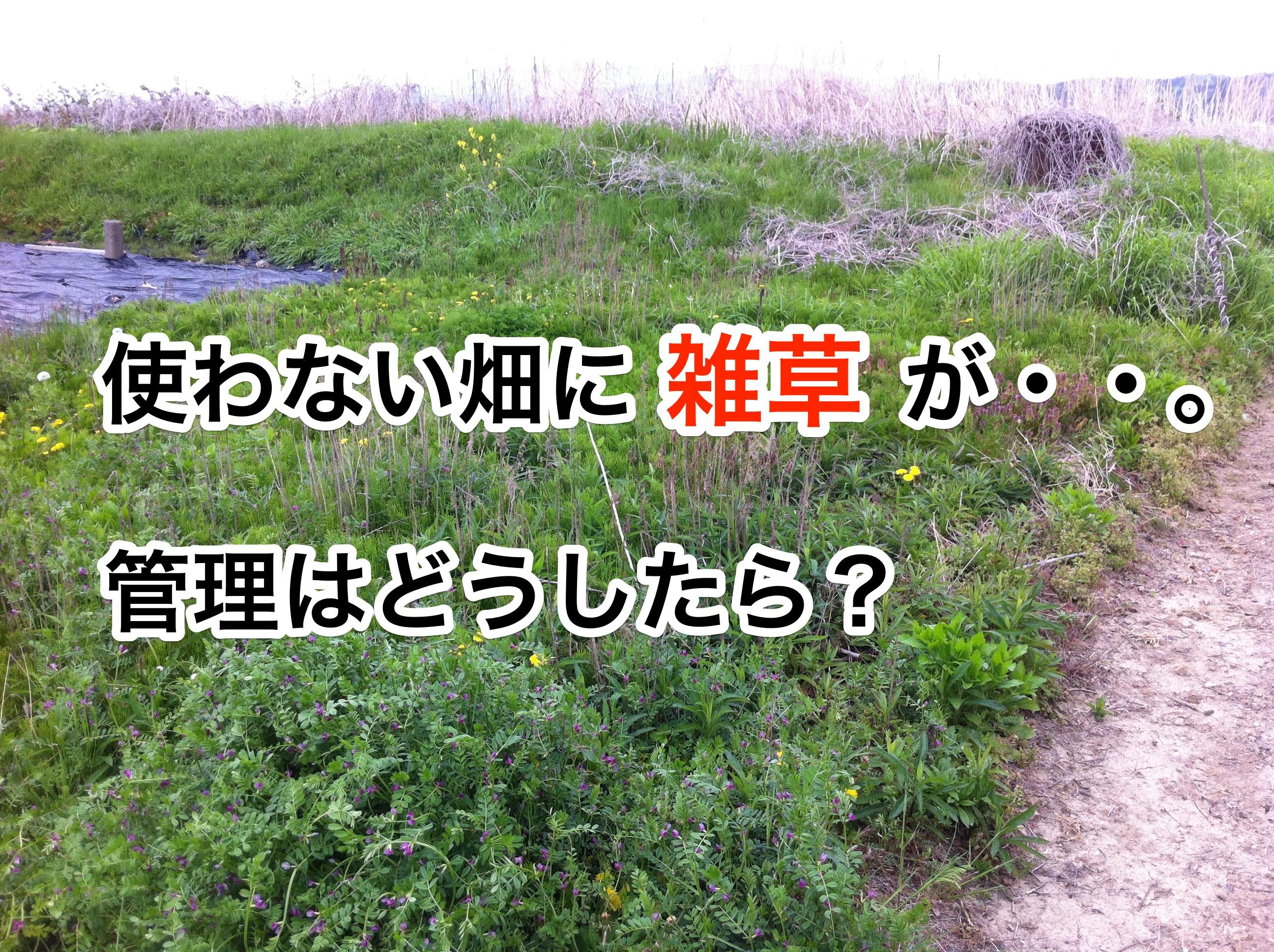 使わない畑に雑草が。管理はどうしたら?