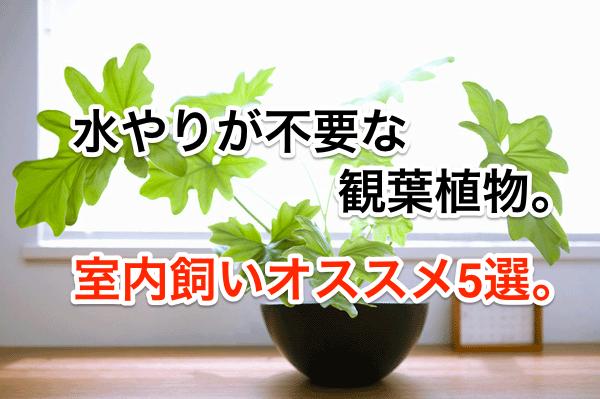 水やりが不要な観葉植物。室内飼いオススメ5種。
