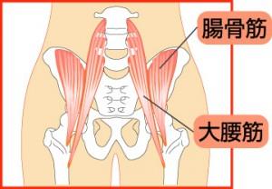 大腰筋の位置