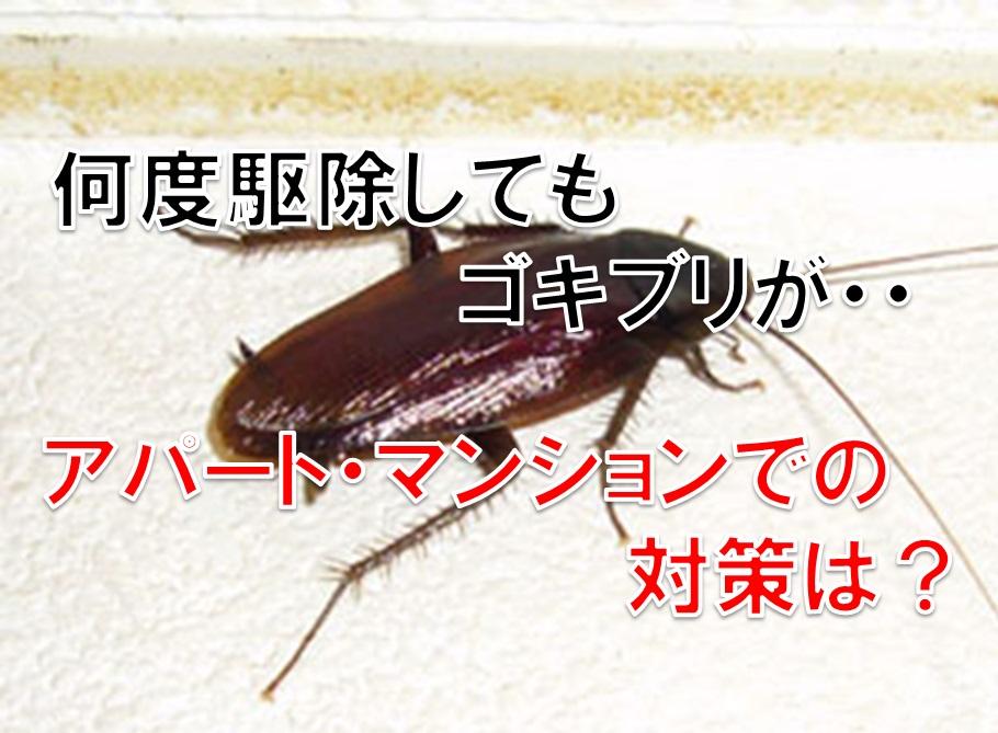 何度駆除してもゴキブリが。アパート・マンションでの対策は?