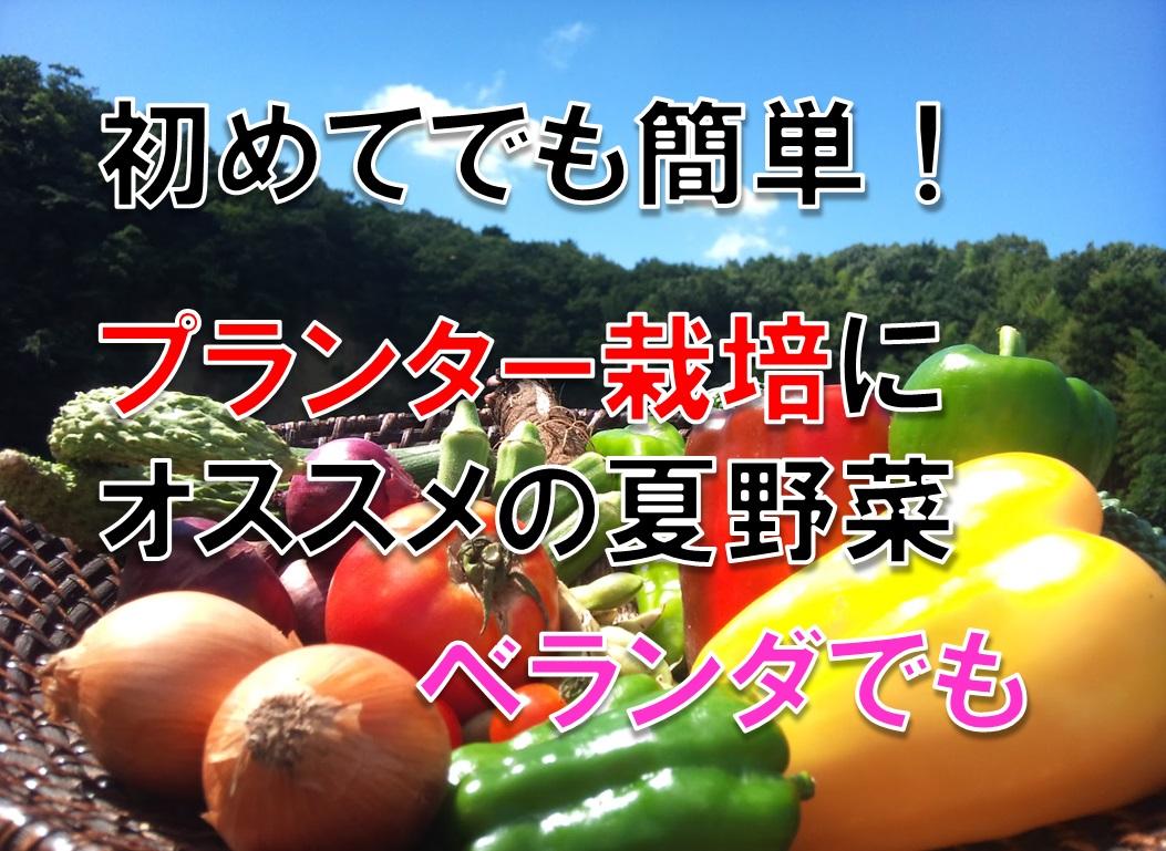 初めてでも簡単!ベランダでのプランター栽培にオススメの夏野菜