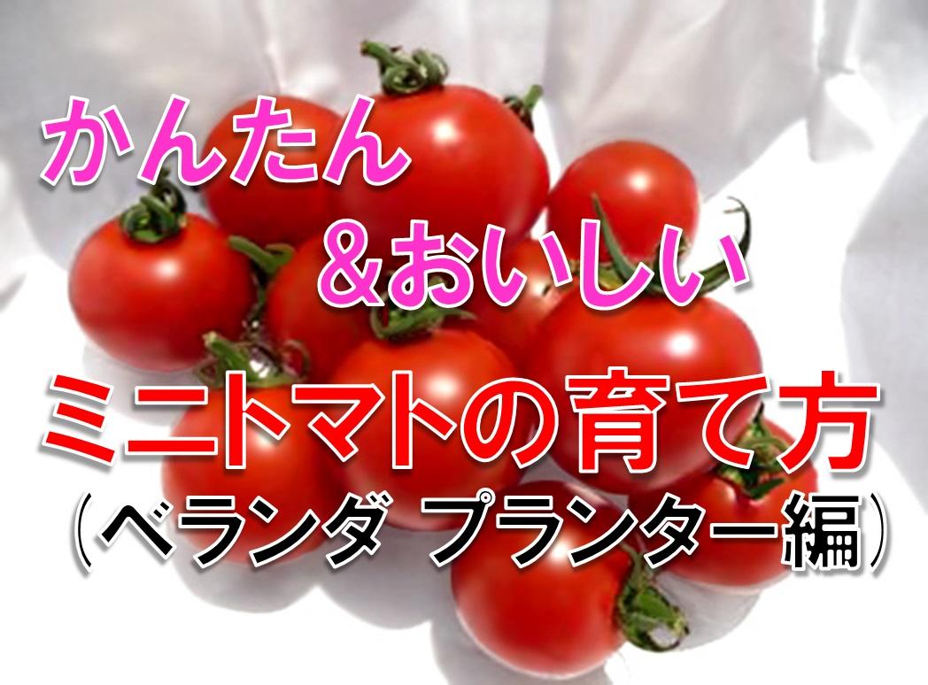 かんたん&おいしい ミニトマトの育て方(ベランダ プランター編)