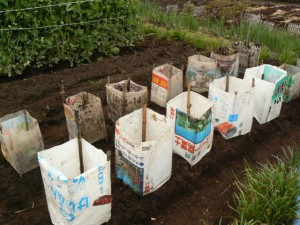 田舎の畑でよく見る光景、通常は肥料袋を使います