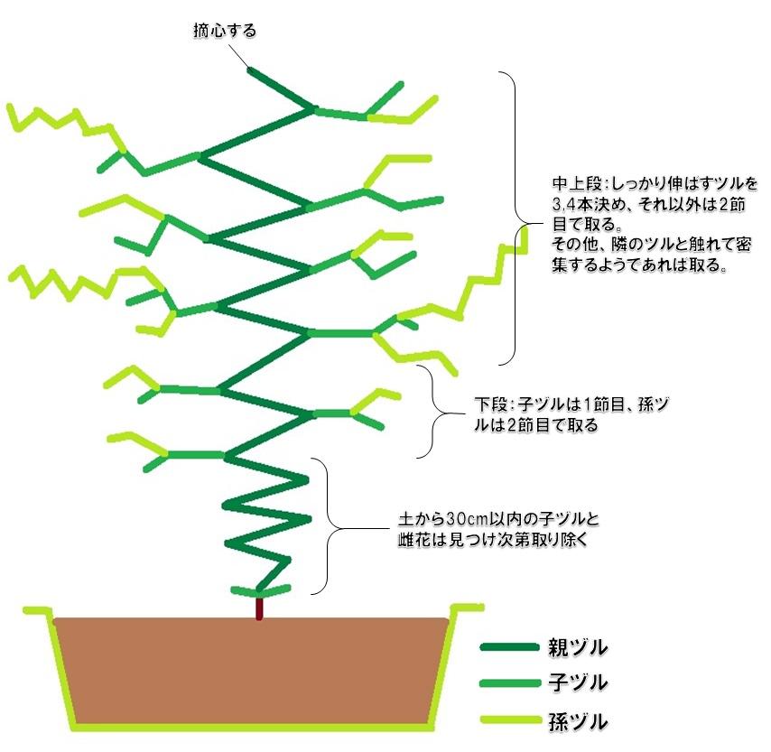 摘心のイメージ図