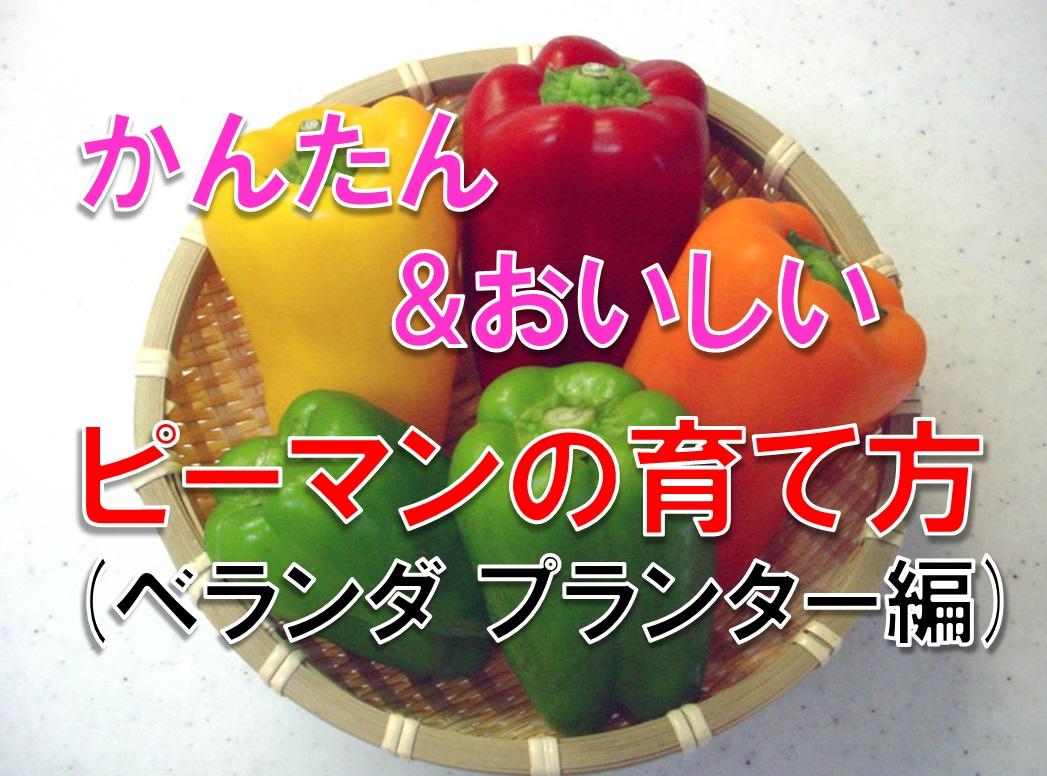 ベランダ家庭菜園 プランターでもゴロゴロ実がなるピーマン・パプリカの栽培方法
