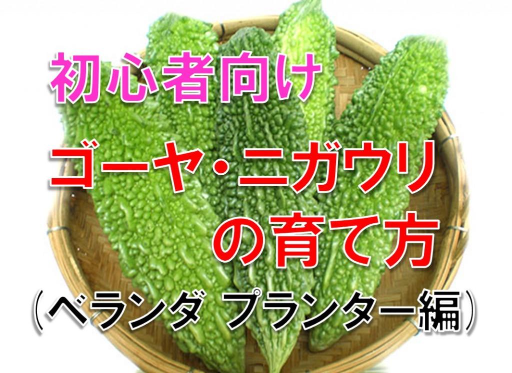 初心者 ゴーヤ・ニガウリの育て方(ベランダ プランター編)
