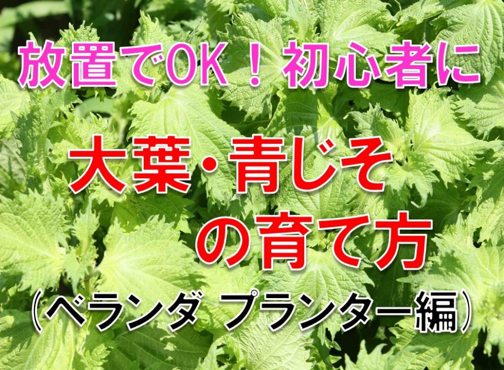 ベランダ家庭菜園 プランターで大量に育つ大葉・青じその栽培方法を紹介する