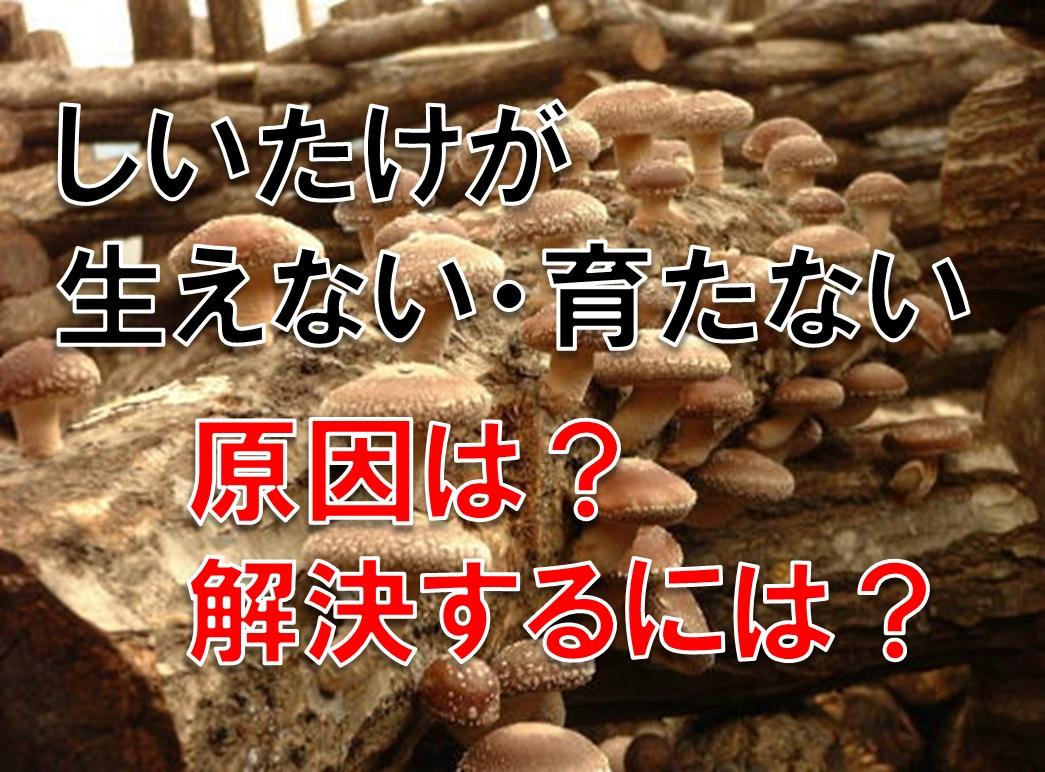 椎茸が生えない・育たない原因は?これで解決できるかも オススメの栽培法