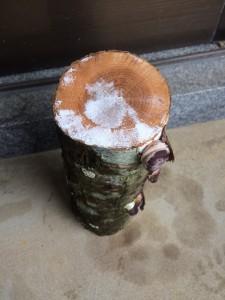 菌が木全体に行き渡ると、断面が白くなる